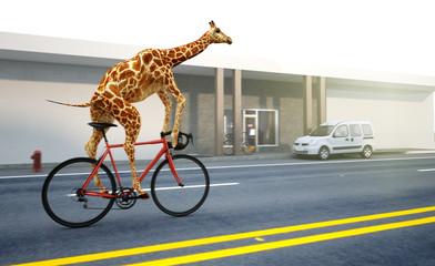 Photo sur Aluminium Girafe Giraffe fährt Fahrrad
