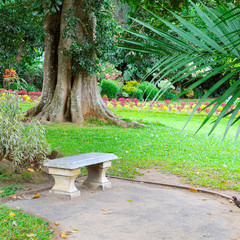 Beautiful tropical park and stone bench for relaxation.
