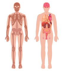 Human Anatomy Set