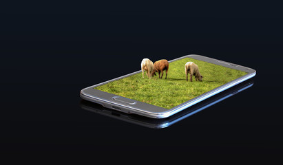 3D photo on a smartphone - sheep in a pasture.