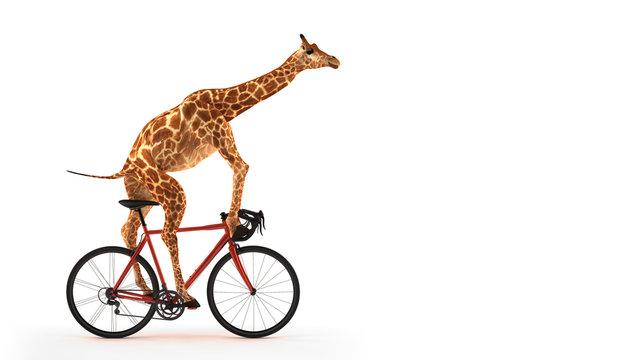 Freigestellte Giraffe auf Fahrrad