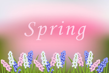 Spring vector blurred background with blooming flowers. Muscari multicolor, pink, white, blue.Branch of green leaves of grass, decorative frame.Greeting card with flower background