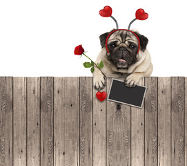 lovely pug dog with hearts diadem, blackboard and rose, hanging on wooden fence, isolated on white background