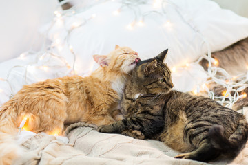 two cats lying in bed with garland at home