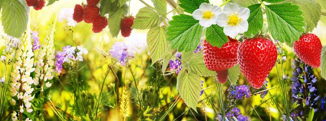garden strawberry and raspberry