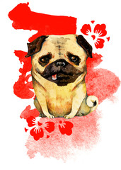 Hand drawn watercolor pug with red cherry flowers for Chines New Year on red spot