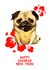 Hand drawn watercolor pug with red cherry flowers and congratulation for Chines New Year