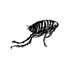 Human flea Icon