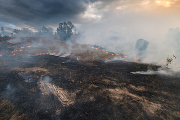 Bushfire, Burned black land on hill in Australia