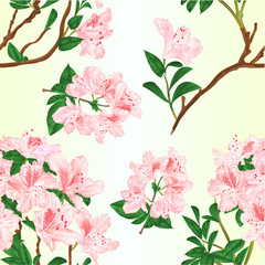 Seamless texture light pink rhododendron branch mountain shrub vintage vector illustration editable hand draw