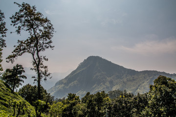 Little Adam's peak forest Sri Lanka