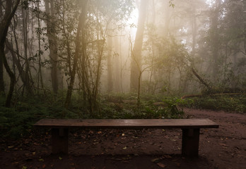 Wooden bench to relax in the foggy jungle.