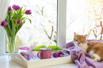 Cozy home concept. Purple fresh tulips in glass vase. Macaroons in glass jar. Cup of hot tea. White tray. Lilac blanket on the windowsill. Red white cat kitty on violet plaid. Sunshine.