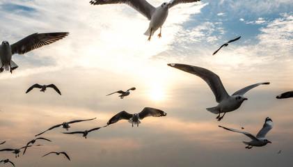 Bangpu, Thailand. January 15 - 2018: Seagulls Flying and the sunset sky background,Bangpu Recreation Center, Thailand