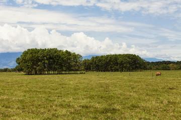 Llanos Orientales de Colombia.