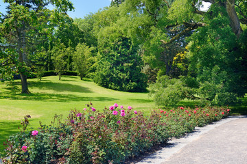 Summer park with flower bed and walkway.