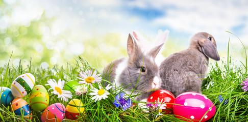 Banner Ostern Eier Hase