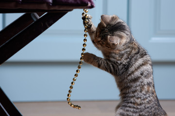Kitten is catching string of beads.
