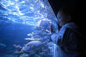 Fototapeta Boy looking at fish in aquarium