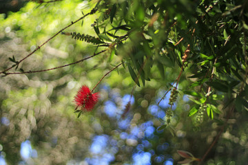 Bokeh Photo of A Red Flower While Looking Up from Under a Tree