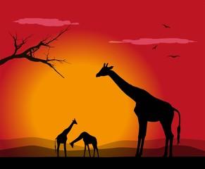 vector illustration of group of giraffes at sunset