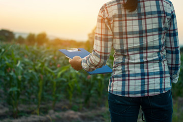 Farmers experimented with growing corn and taking notes.