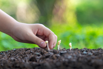 Little asian girl holding young plants in the nature park and see stages of growth of plant and seed for reduce global warming.  Ecology concept.