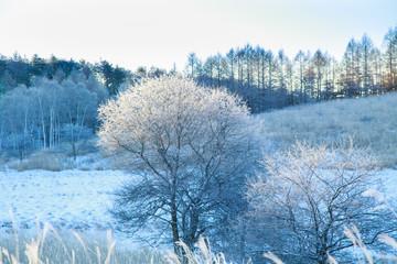 霧ヶ峰高原夜明けの霧氷