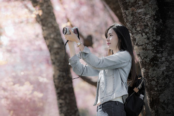 Young woman traveler take photos by camera under cherry blossoms tree