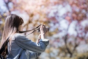 Young woman traveler take photos by camera under cherry blossoms tree. Women traveler use camera take a photo cherry blossoms or sakura in full bloom .