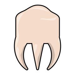 molar icon image