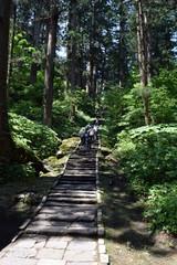羽黒山の杉並木 / 山形県鶴岡市の羽黒山参道の杉並木は県指定史跡で、全国かおり風景100選、森林浴の森100選に選定されています。随神門から始まる表参道は、全長約1.7km、2446段の長い石段です。杉並木の数は500本以上で、樹齢350~500年の杉並木です。この杉並木は国の特別天然記念物に指定され「ミシュラン・グリーンガイド・ジャポン」にて、三ツ星を獲得しました。