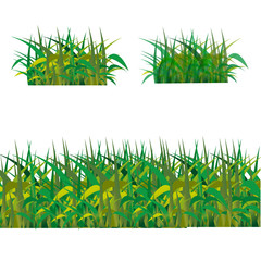 Green grass isolated on white background, vector illustration.