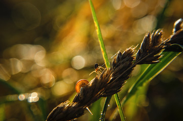 SPIDER AND SNAIL - Wildlife in the morning in the grass