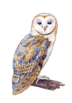 Watercolor hand drawn picture of the barn owl on the white background