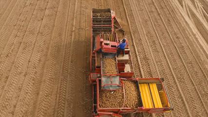 Farm machinery harvesting potatoes. Farmer field with a potato crop.