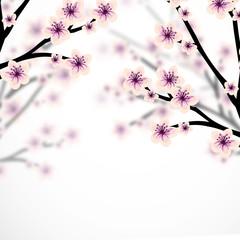 Beautiful cherry blossom illustration