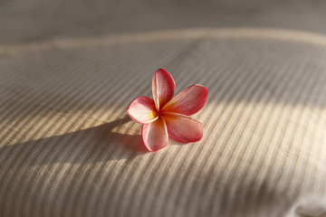 A pink tropical flower on a hotel bed lighted by a low sun.