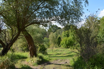 Wieś natura zieleń  Countryside nature green