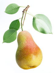 One pear fruit with pear leaves on white background.