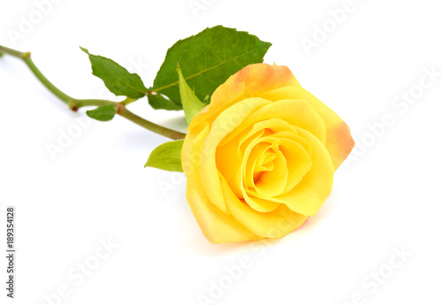 Single Yellow Rose Isolated On White Background Stock Photo And