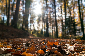 Beautiful autumn landscape in the forest, a different perspective from the ground