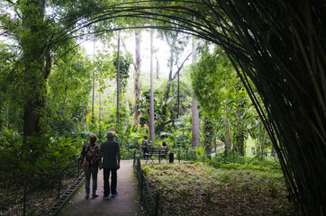 Unidentifiable older couple walk underneath a bamboo tree in a Brazilian tropical park