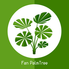 Fan palm tree. Illustration of exotic tropical plant