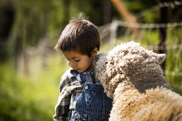 kid and sheep