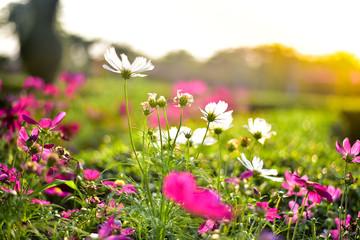 Flower white on the sunlight