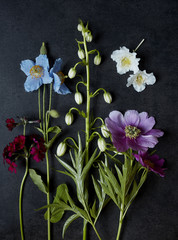 Botanical specimens of poppies, martagon lily, peony, primrose, azalea