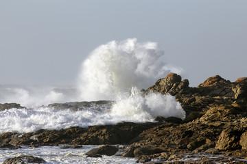 Sunny wave splash
