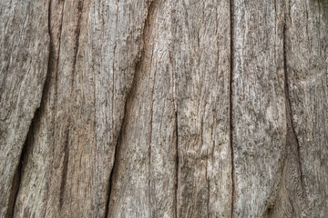Rough Tree Bark Texture
