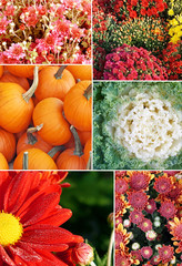 Collage of photographs of Fall Flowers and Vegetables